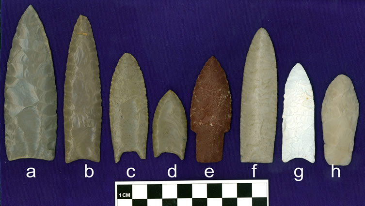 "Examples of casts of classic Paleoindian projectile points in the Haynes Cast Collection from key sites on the Great Plains: a, b) Clovis points from the Clovis site (Blackwater Draw No. 1) in New Mexico; cast (b) is one of the ""type"" Clovis points; ; c,d) Folsom points, also from the Clovis site; e) an Alberta point from the  Hudson-Meng site, Nebraska; f) a Cody/Firstview point from the Clovis site; g) a Plainview point from the Plainview site, Texas; h) a Hell Gap point from the Hell Gap site, Wyoming.  These points are color matched, except for g."